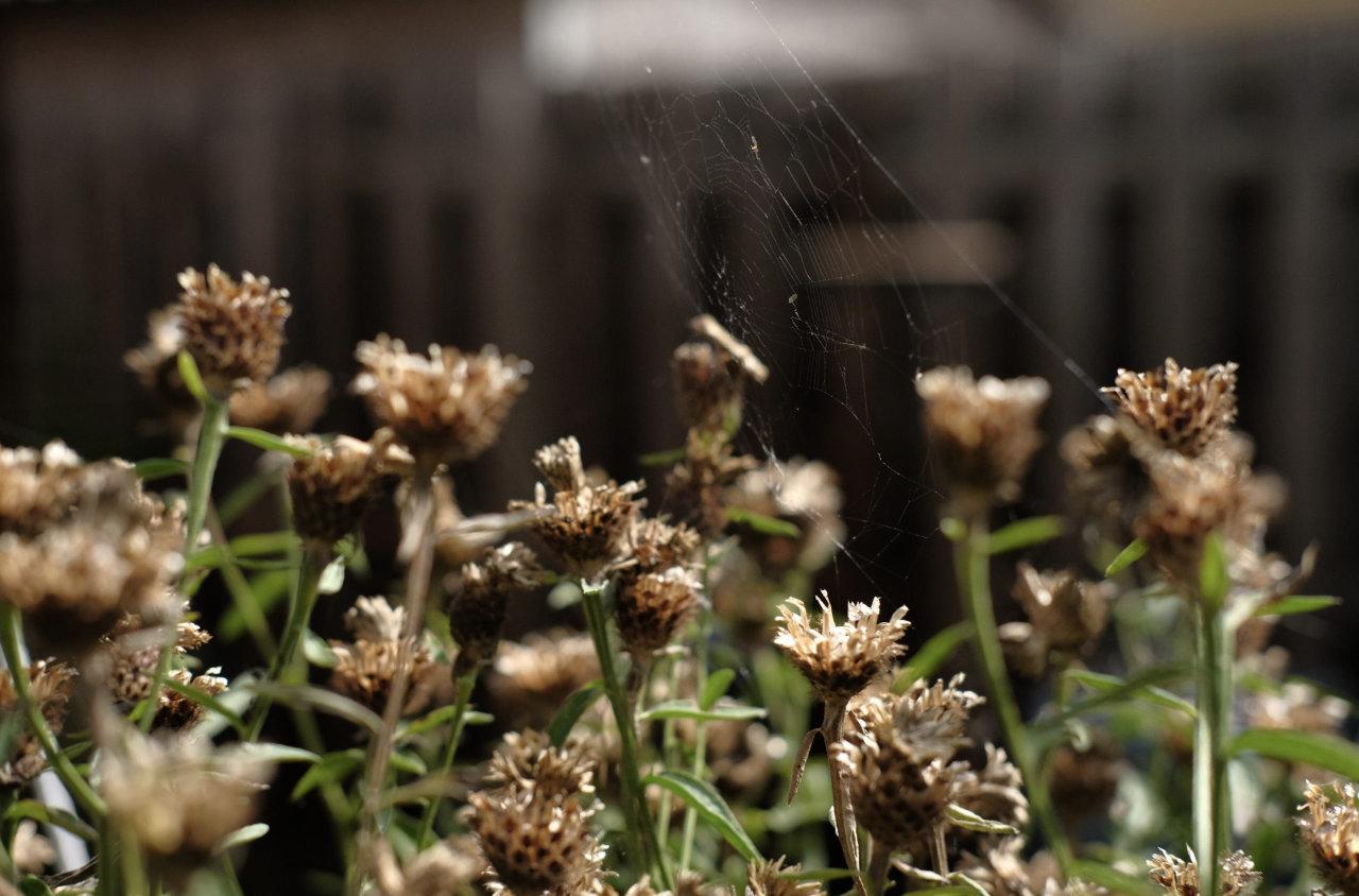 An abandoned cobweb in my garden